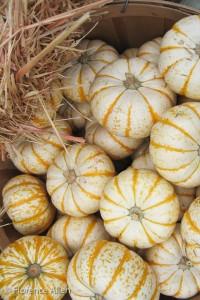 Fancy Gourds