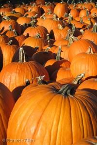 Late Sun Pumpkins