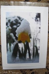 Spring Miniature Daffodil