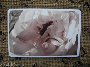 Postcard Rose