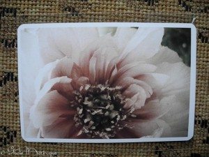 Postcard Peony