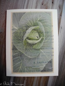 French Cabbage