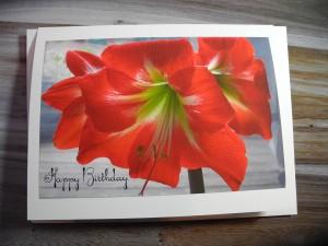 Amaryllis Happy Birthday