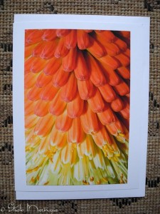 Kniphofia: Seeing this flower close-up is such a delightful perspective.