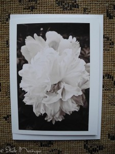 Turning this Peony photo to a Sepia tone, gave it a soft painterly quality, reminiscent of Georgia O'Keefe.