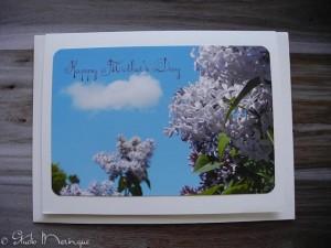 Lilacs and a Cloud