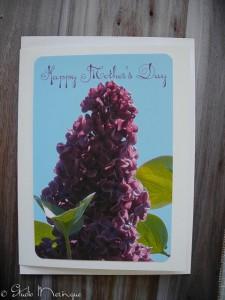 Deep Purple Lilac