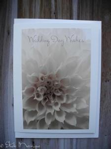 Wedding Day Wish Dahlia