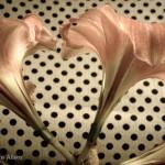 Amaryllis Heart